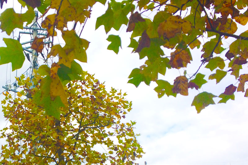 秋に染まる木々