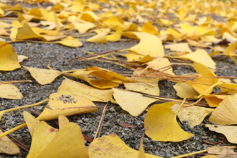 たくさんの葉っぱ
