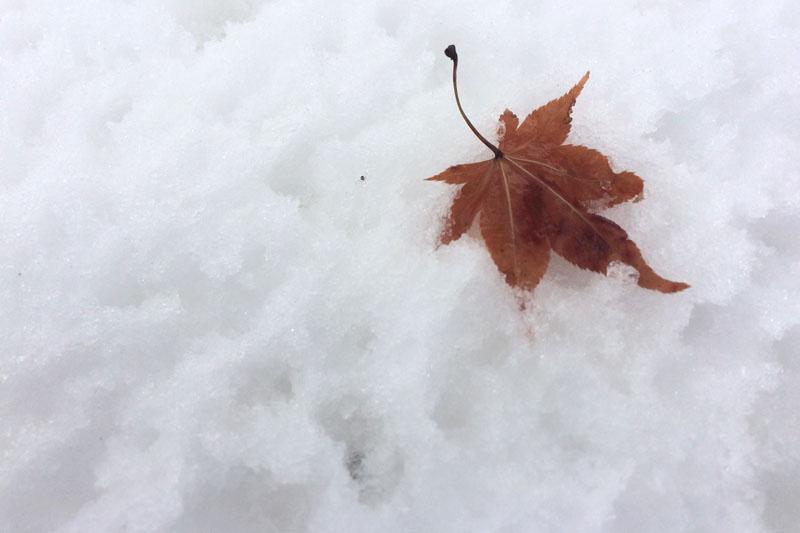 雪と枯れ葉
