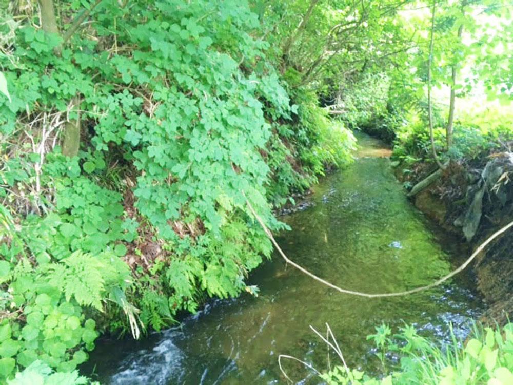 大崎市鳴子温泉地域の森の水