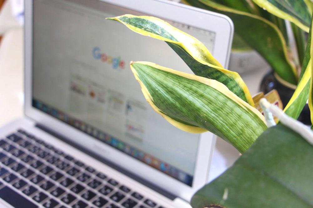 葉っぱとノートパソコン