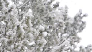 東北でかつてない大雪が降りました!